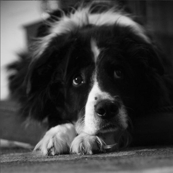 kozikphotography#dogsofinstagram #utahphotography #photography #animalphotography #bwphotography